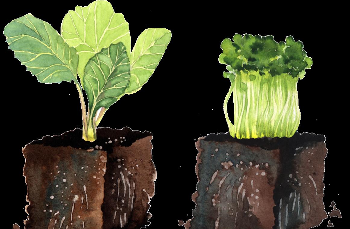 Ilustracja kompostu